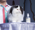 Prague 25/26.10.2014 FIFe World Cat Show